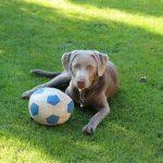 Familienhund Skye