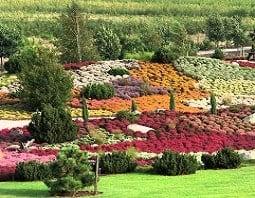 ein buntes Bild voller verschiedenfarbiger Pflanzen und Blumen